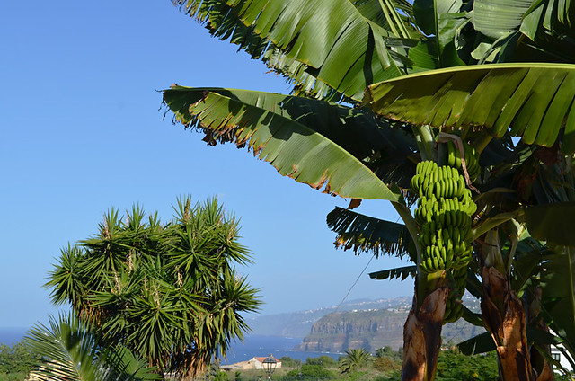 Bananas and north coast, Tenerife