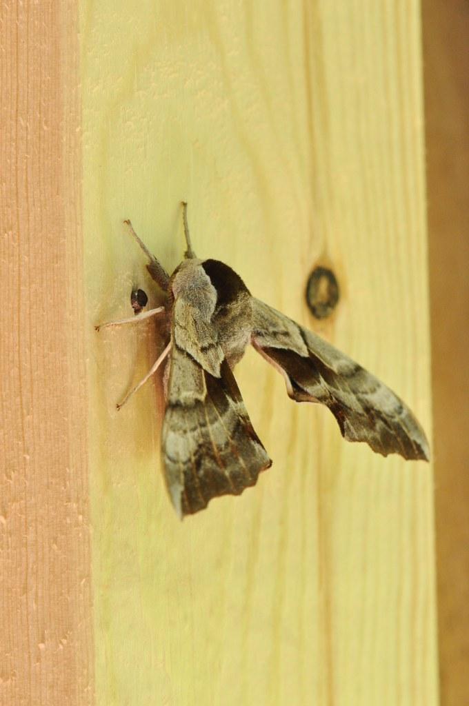 Moths - cover