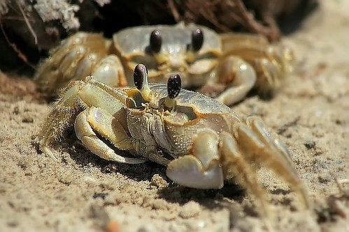 sand crabs | © slight clutter photography | Katya Horner ...