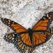 monarcas01