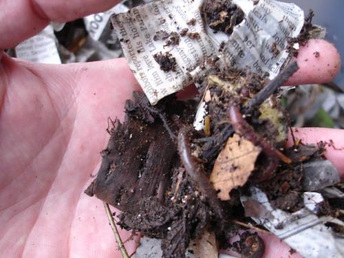 White Worms In Kitchen Trash