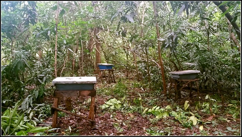 This picture is kind of out of place in the text but had to evenly distribute the pictures -- this is some of the beehives we looked at earlier