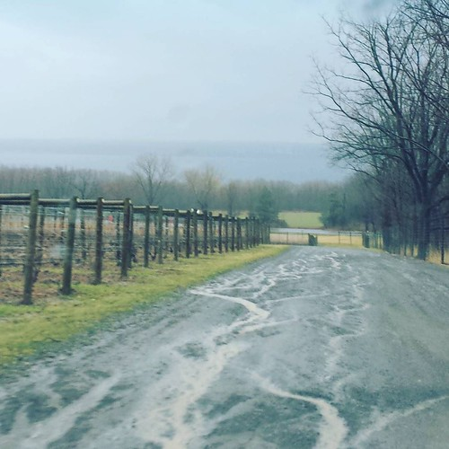 Muddy driveway at a Seneca Lake winery #fingerlakes #senecalake #winery