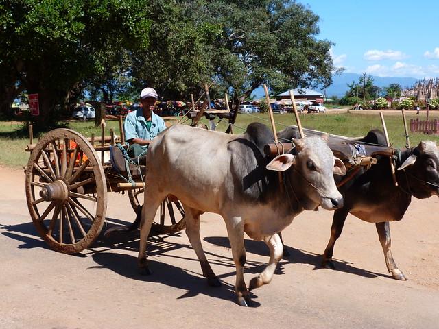 Carro de bueyes en Myanmar