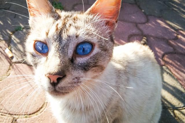 Beautiful blue cat eyes