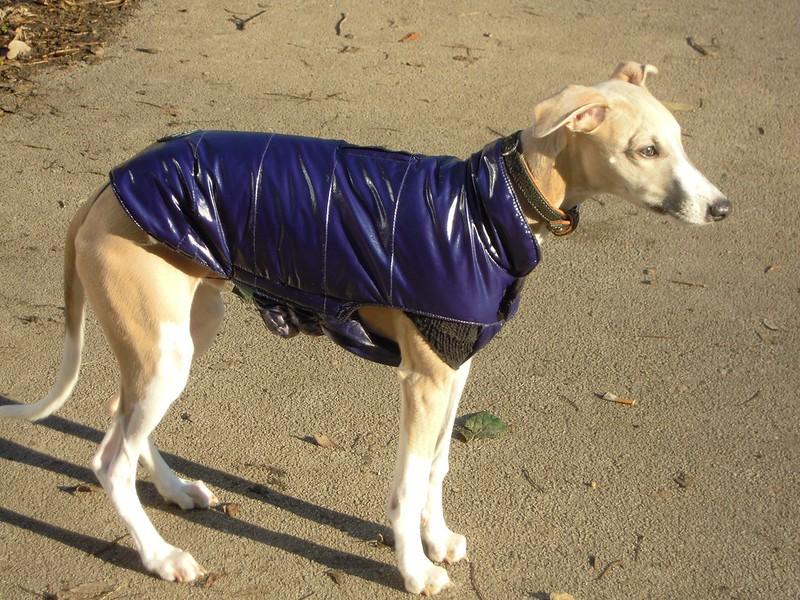 Als ich ihn das letzte Mal sah, war der Mantel noch zu groß :-)