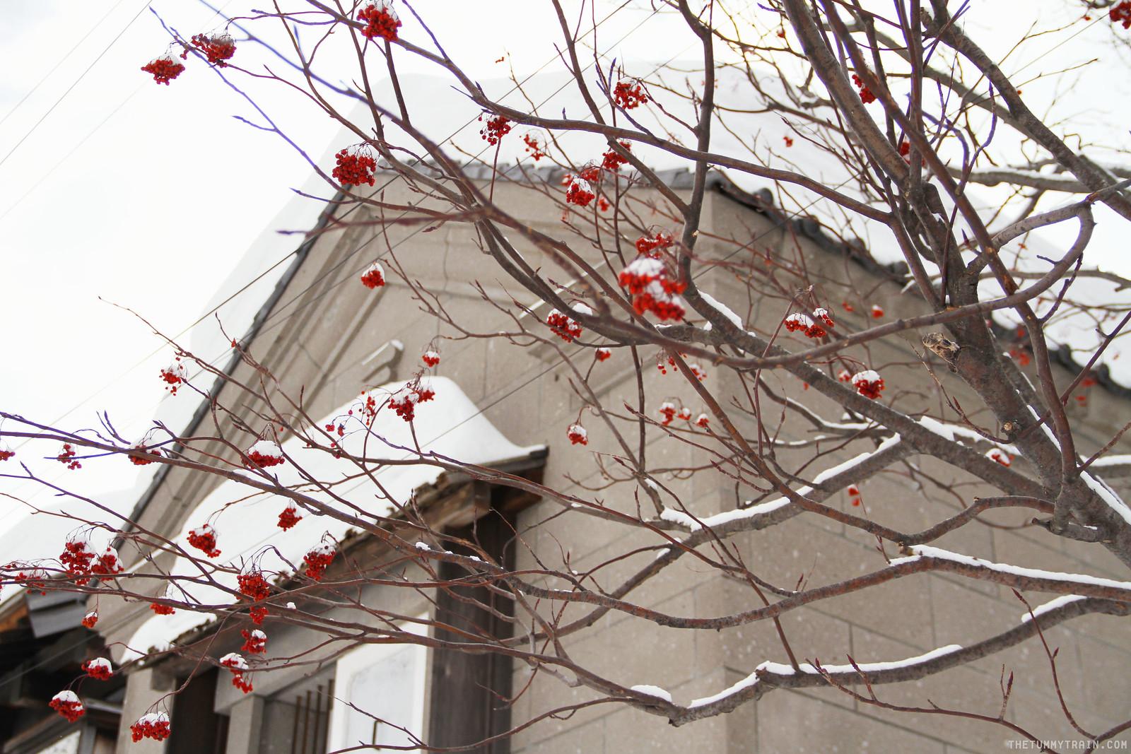 32877130386 9057907ce1 h - Sapporo Snow And Smile: 8 Unforgettable Winter Experiences in Sapporo City