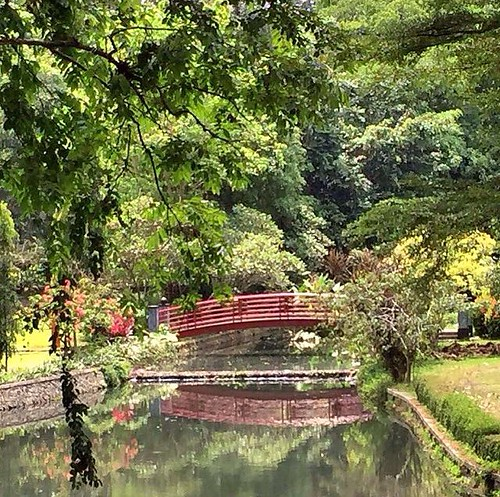 The Bogor Botanical Gardens As A Stop Between