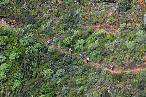 Walking group, Anaga, Tenerife