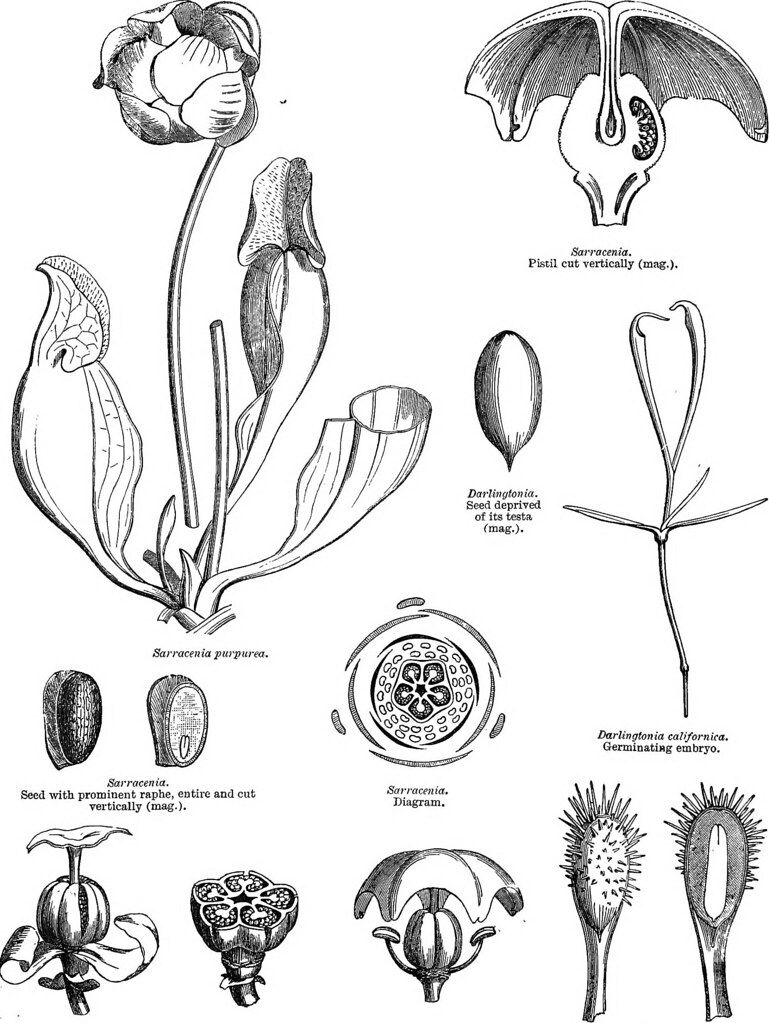Image From Page 230 Of A General System Botany Descri Flickr Gallery Images And Information Germination Seeds Diagram Descriptive Analytical