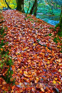 Autumn (11 photos)