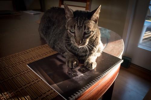 Feline Friday: February 3, 2017
