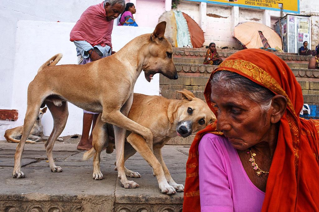 Dogs - Varanasi, India