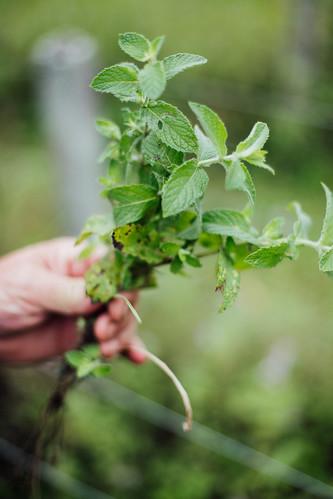 Quinoa com Sementes e Ervas