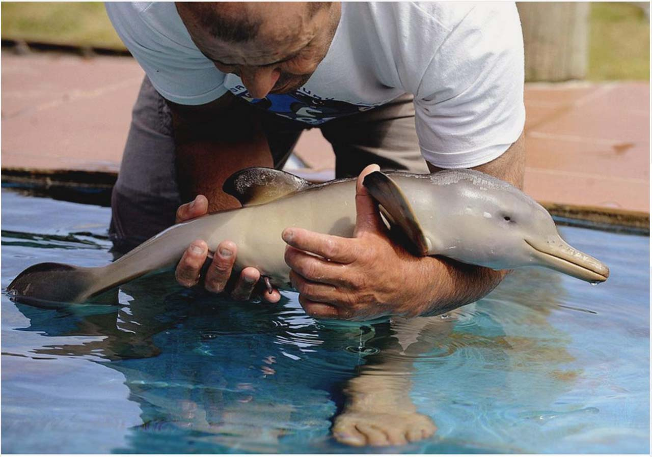 27 Adorable & Tiny Animals That Are Too Cute To Handle #25: Dolphin