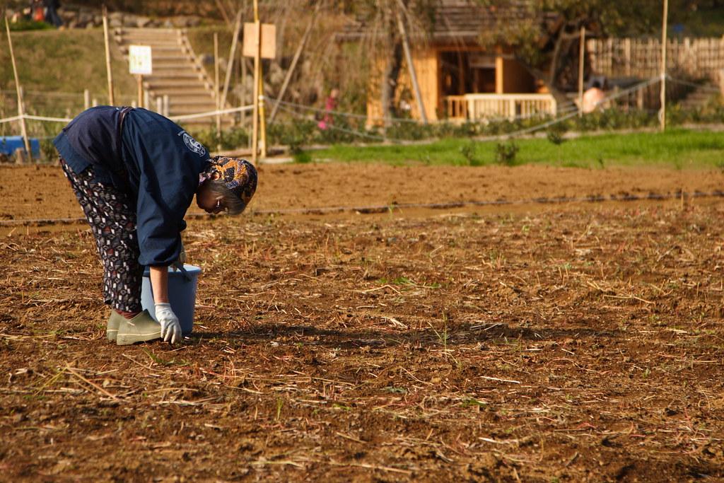 日本農業。勞工。mrhayata(CC BY-SA 2.0)