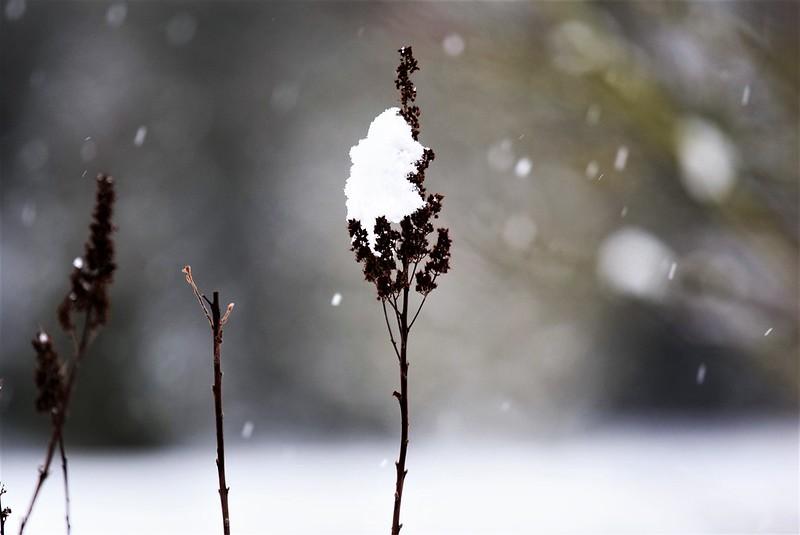 Snow 15.01 (12)