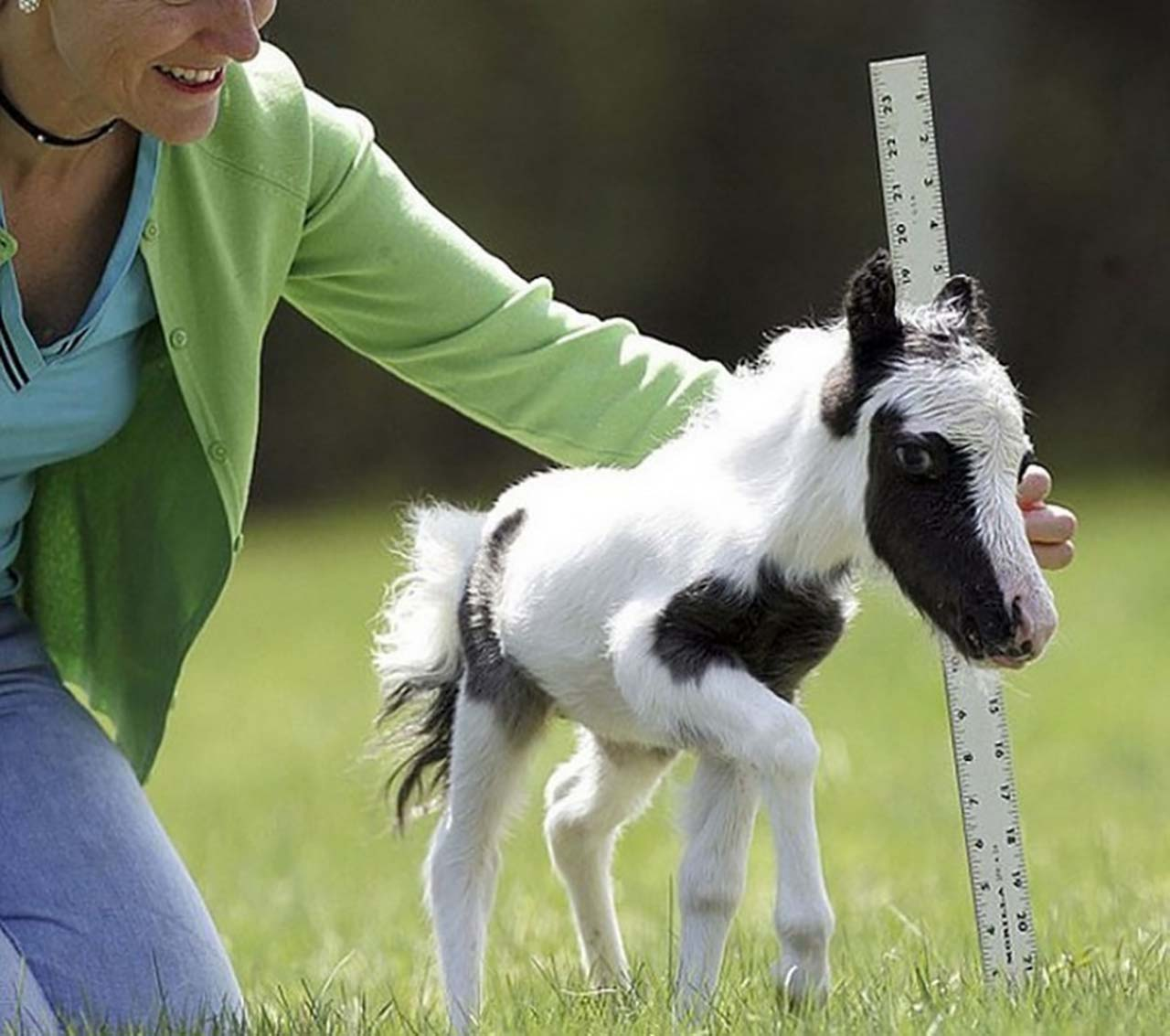 27 Adorable & Tiny Animals That Are Too Cute To Handle #17: Miniature Horse