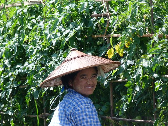 Recolectora de un jardín flotante en el Lago Inle (Myanmar)