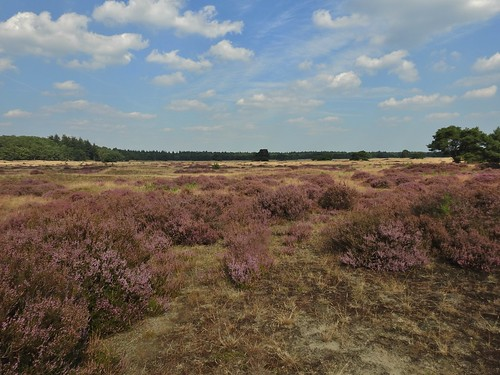 De Hoge Veluwe National Park near Ede, Gelderlad, Holland - August 2016