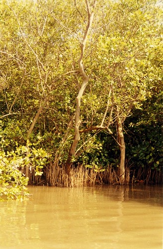 Mangroves at Pichavaram | by Anand Krishnamoorthi