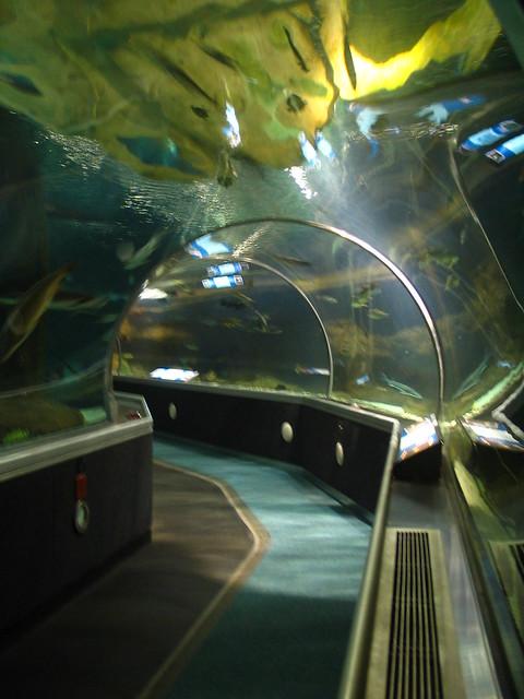 Underwater Adventures Aquarium at the Mall of America ...