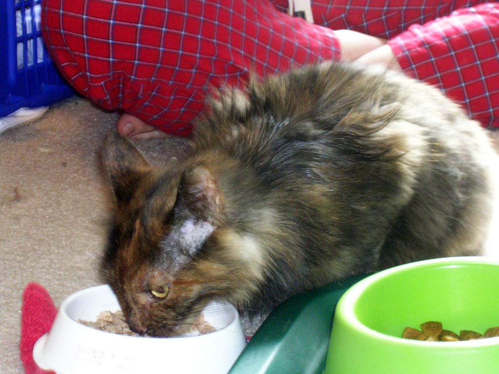 Friskies Wet Food Addictive Ingredients For Cats