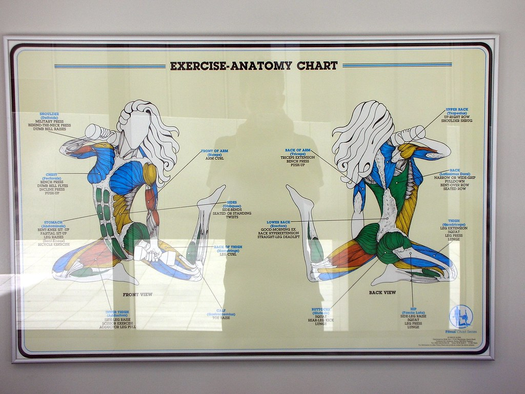 Exercise Anatomy Chart In The European Patent Office Fabi Flickr