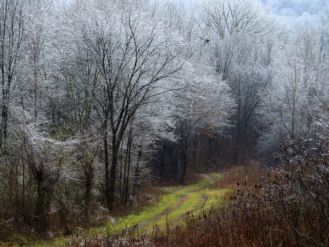 Apple Creek after the ice storm
