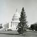 1972 U.S. Capitol Christmas Tree