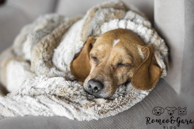 Consejos para proteger a tu perro del frío