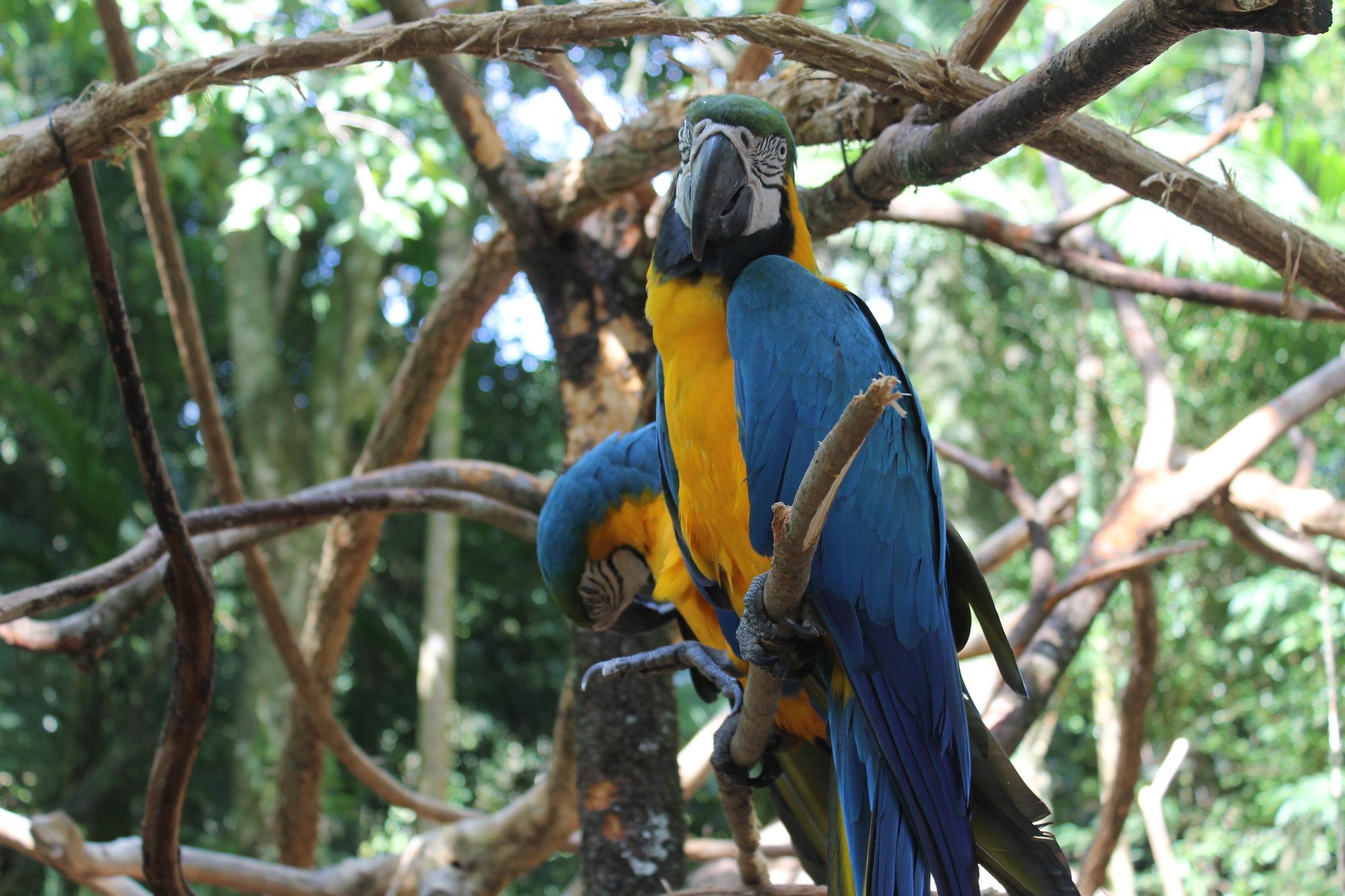 parque-das-aves25