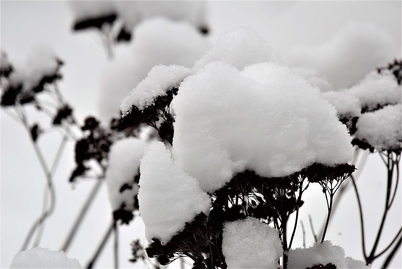 Snow 15.01 (16)