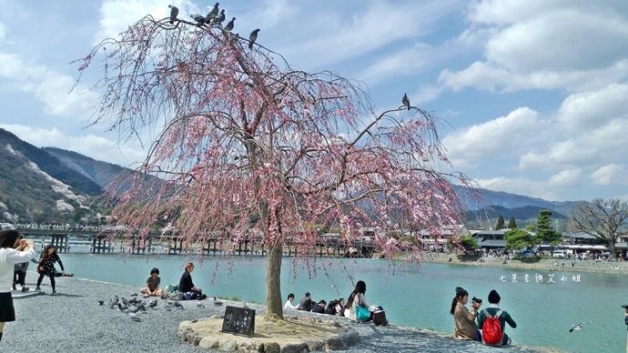14 京都 嵐山渡月橋 賞櫻 櫻花 Saga Par 五色霜淇淋 彩色霜淇淋