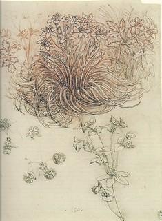 達文西的植物學研究繪圖。圖片來源:wikimedia。 public domain