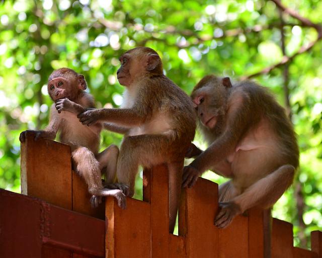 Monos de la playa de Railay