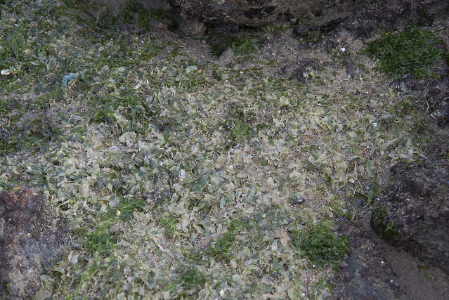 Seagrasses 'bleaching' at Changi Creek after oil spill