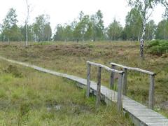 Hochmoor im Rotter Wald