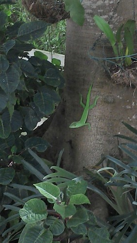 green lizard in tree zoomed