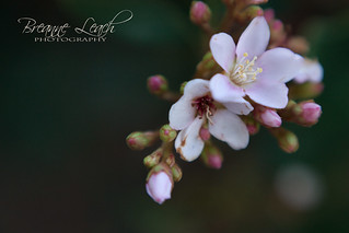 Little Flowers | by Breanne Leach Photography