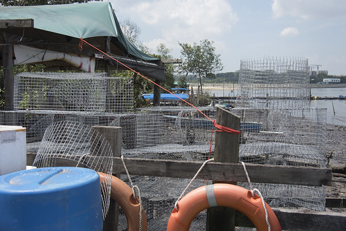 Fish traps at Seletar