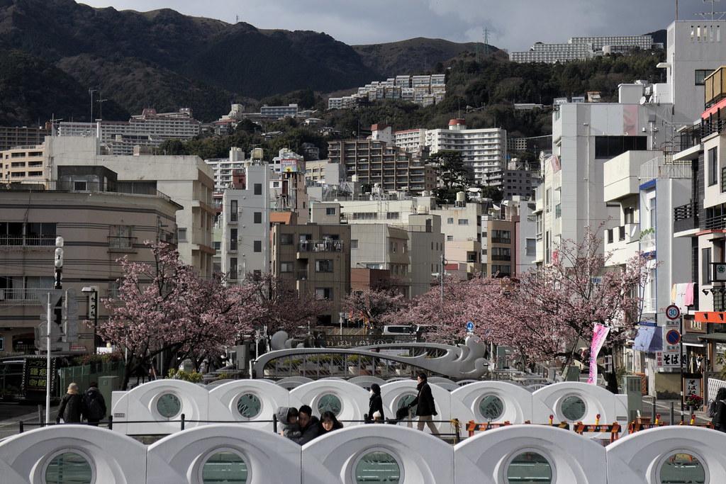 Atami: Sakura & Ume