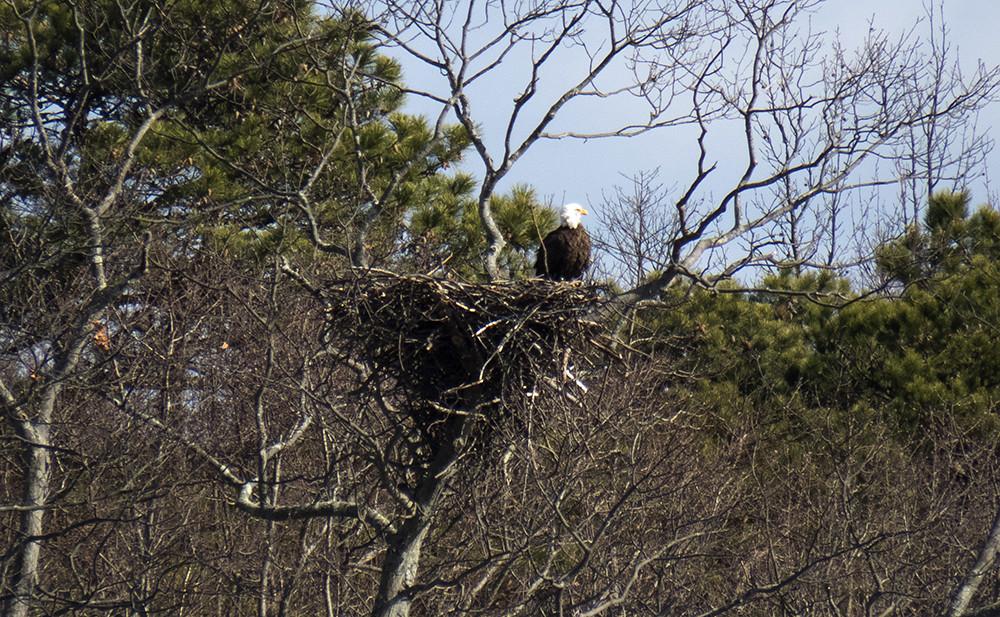 Manasquan Eagle