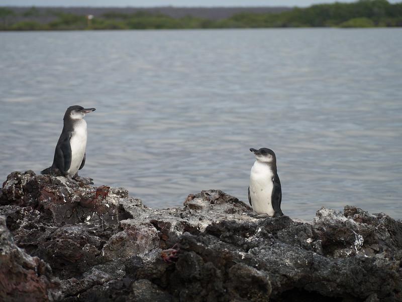 Galapagos-58.jpg