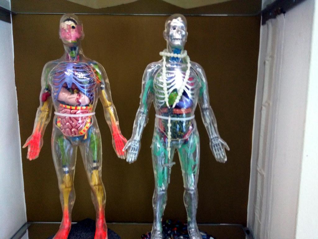 Richard Cardran\'s modified Visible Man models 2, Echo Park…   Flickr
