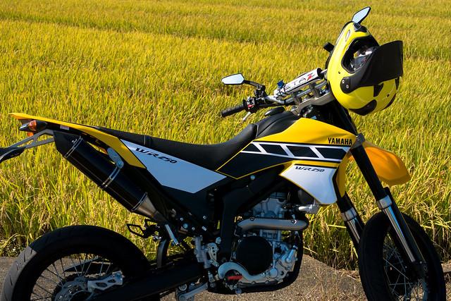 Autumn Yellow - G7X