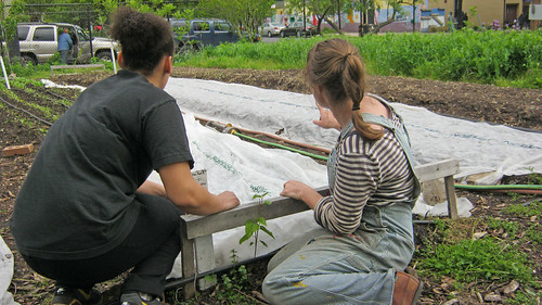Workers on East New York Farms surveying crop beds and garden layout