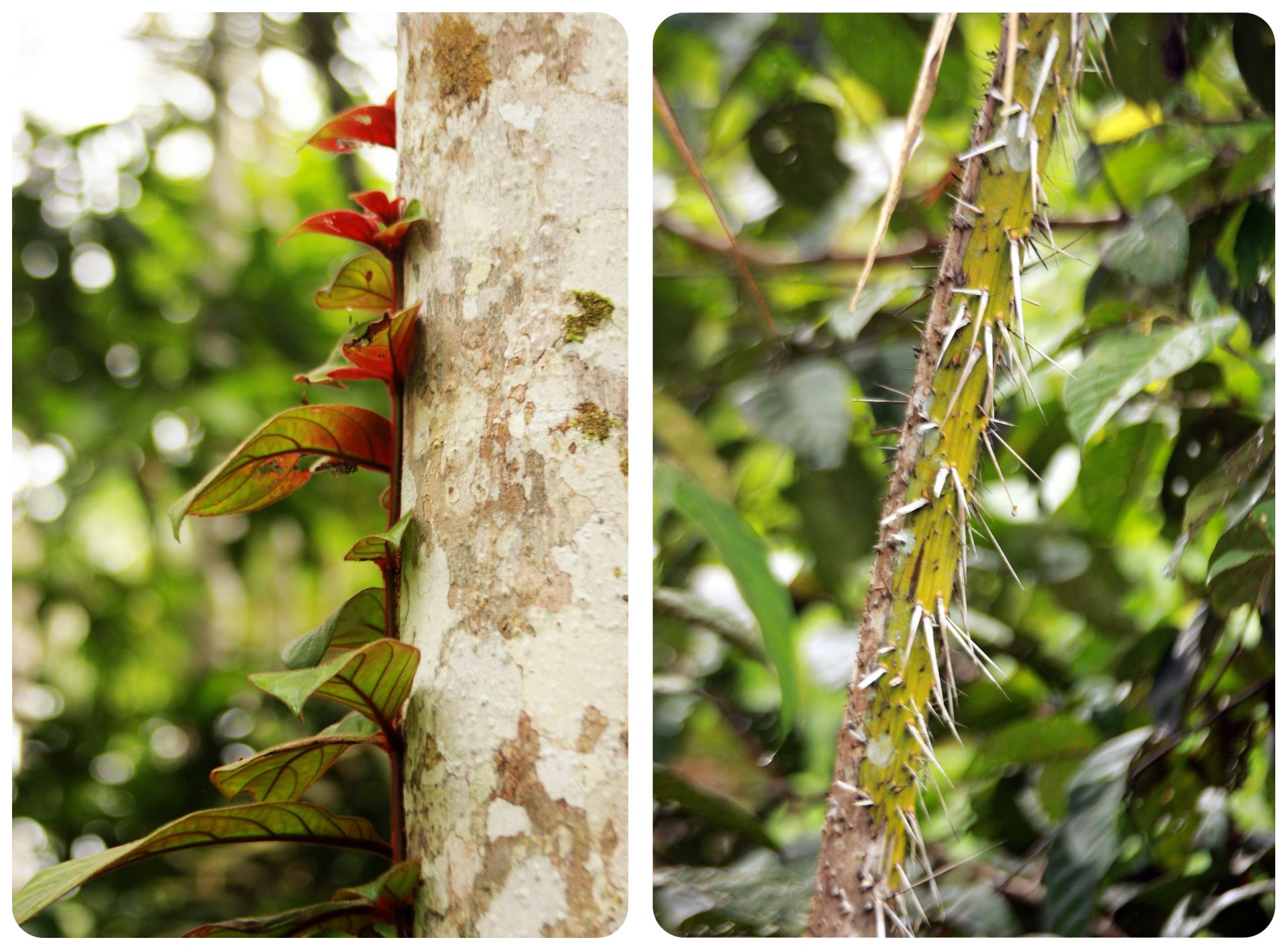 ayahuasca experience colombia