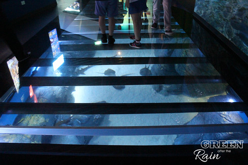 160908d Maritime Museum and SEA Aquarium _426