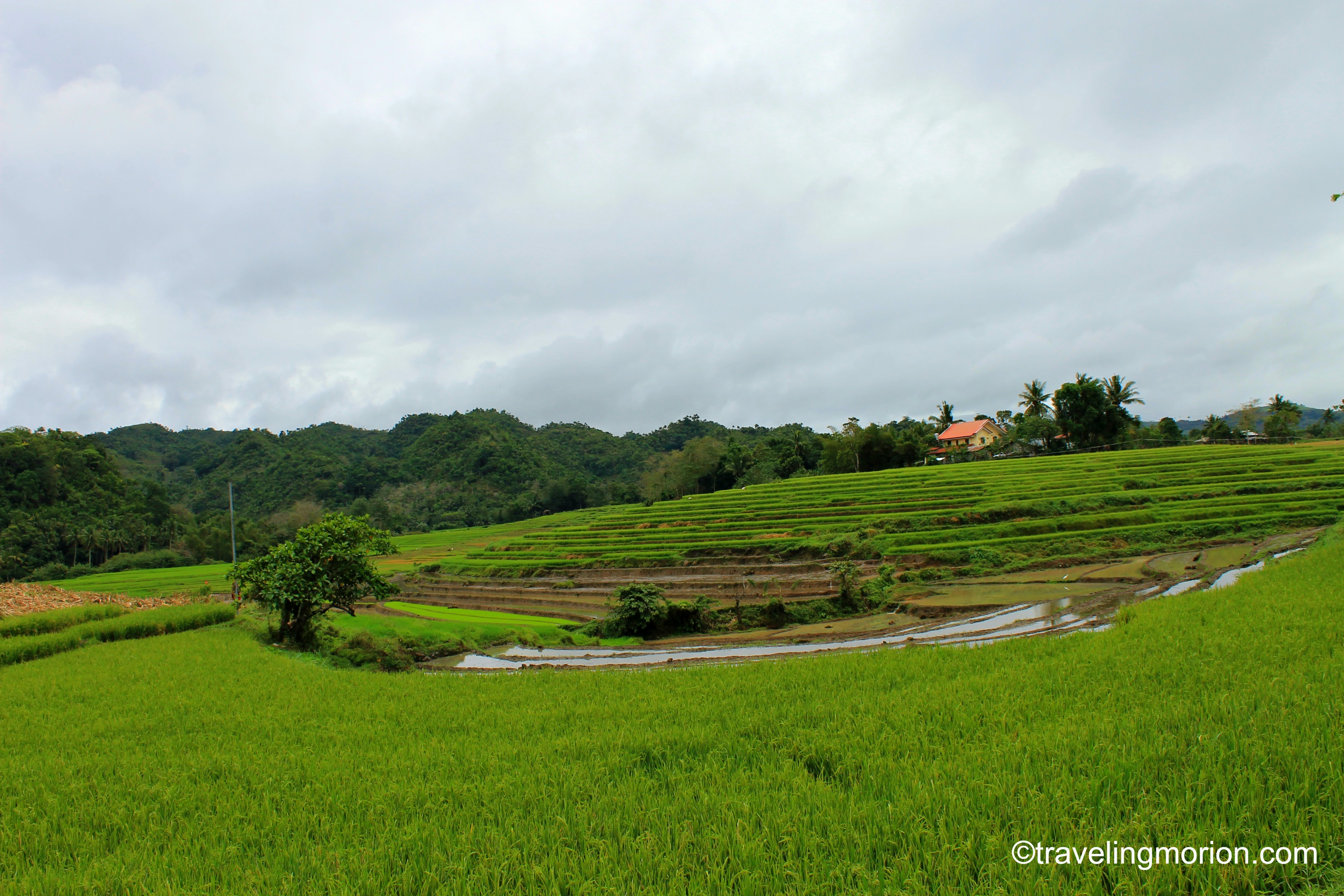 Codcod Rice Terraces of San Carlos City, Negros Occidental